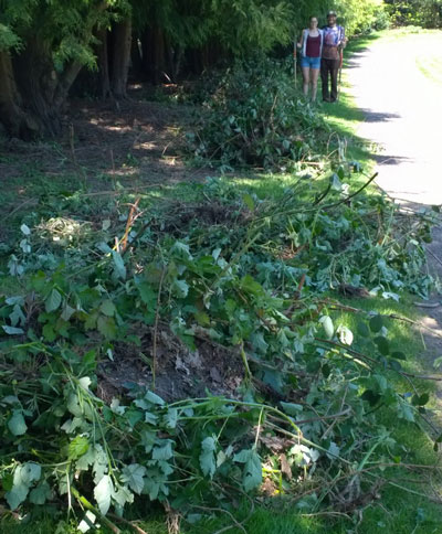 Mounds of invasive blackberries removed at the Pier Park Pick-Up