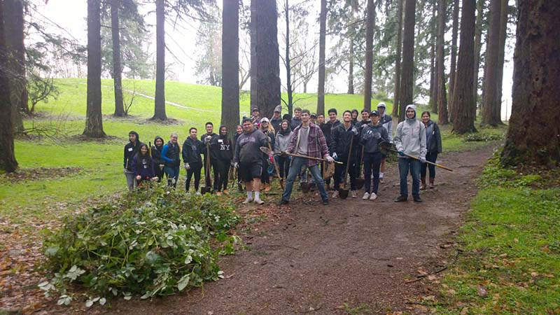University of Portland students removing blackberry vines.