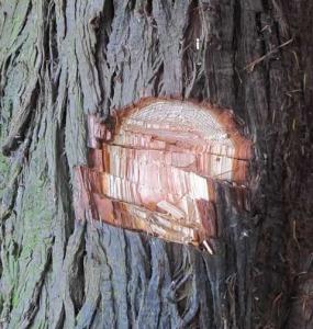 Tree-1b