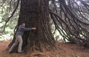 Adena Long, Director of Portland Parks and Recreation, in front of a Giant Sequoia tree at Pier Park