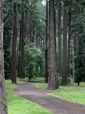 Path through wooded Pier Park